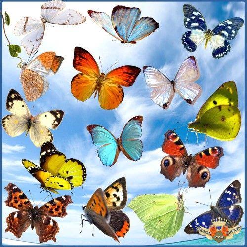 Amazing Butterflies Clip Art