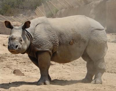 Born in San Diego's Wild Animal Park on 25 January 2005