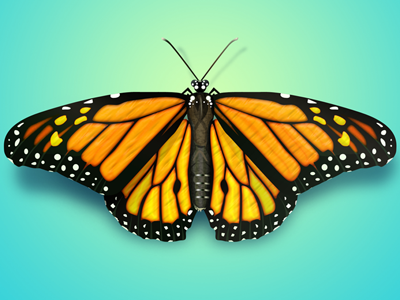 Butterfly Illustrations Free