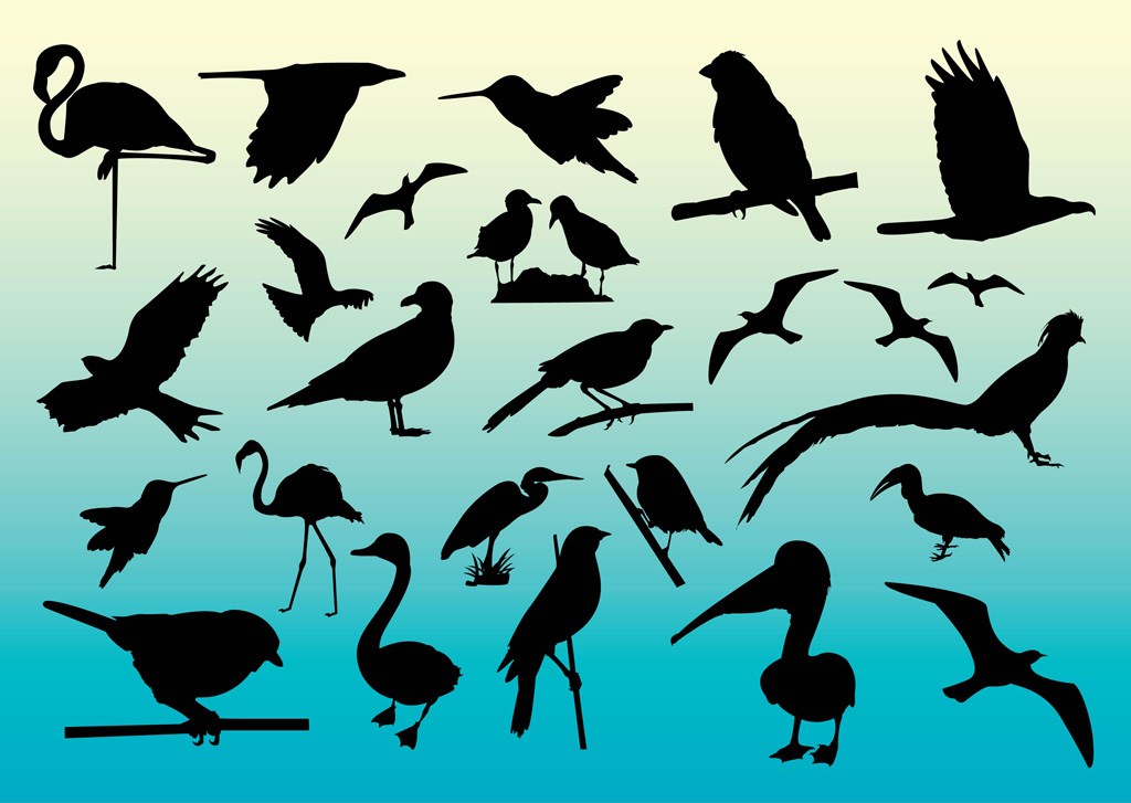 16 Free Vector Birds Images