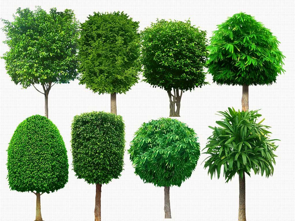 6 Tree Photoshop PSD Images