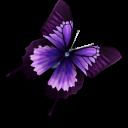 Purple Butterfly Icon