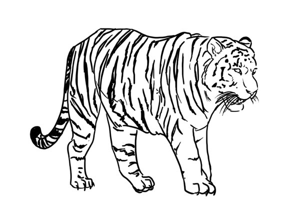 Line Drawing Tiger : Line art psd tiger deviantart images transparent