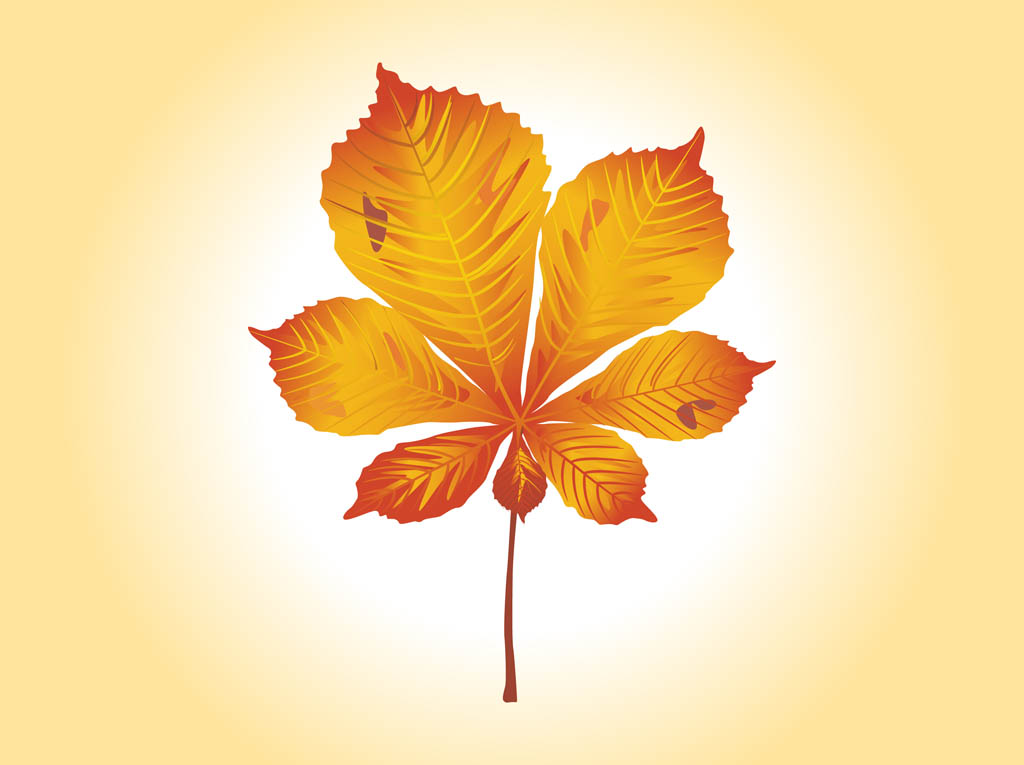 18 Fall Leaf Graphic Vector Images
