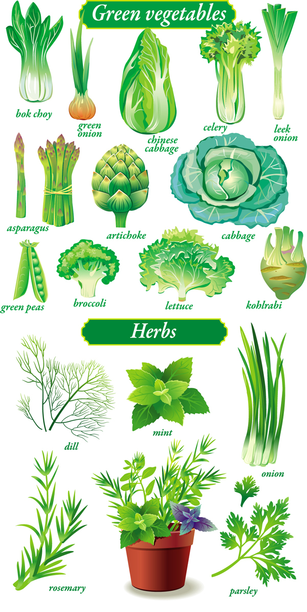 11 Green Vegetables Vector Images