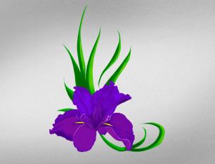 Iris Flower Vector Art