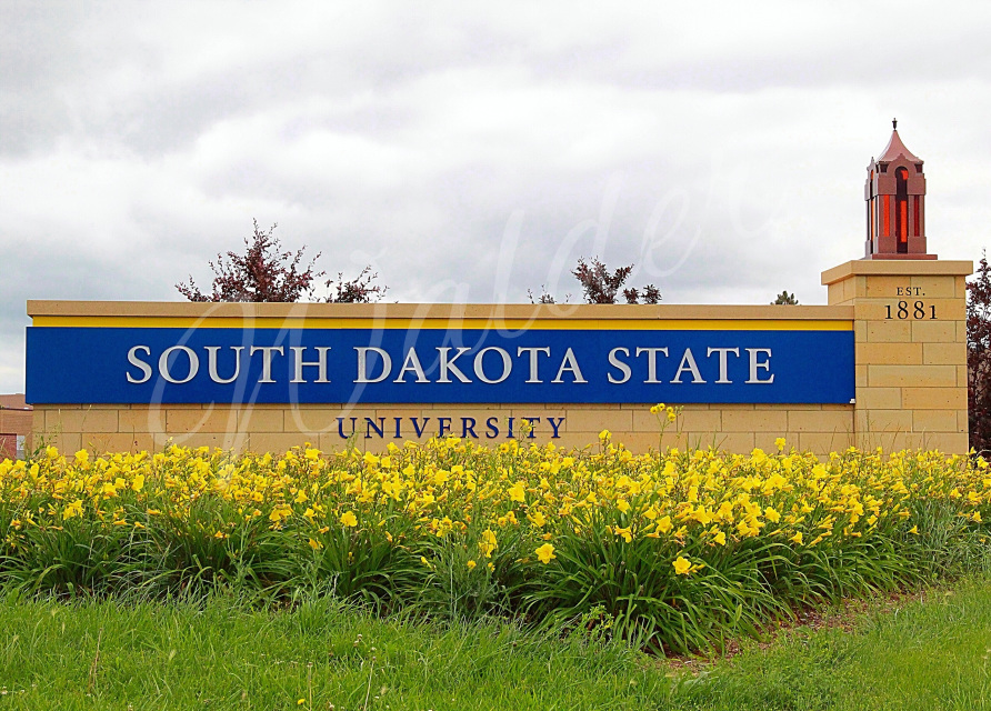 9 South Dakota State University Card PSD Images