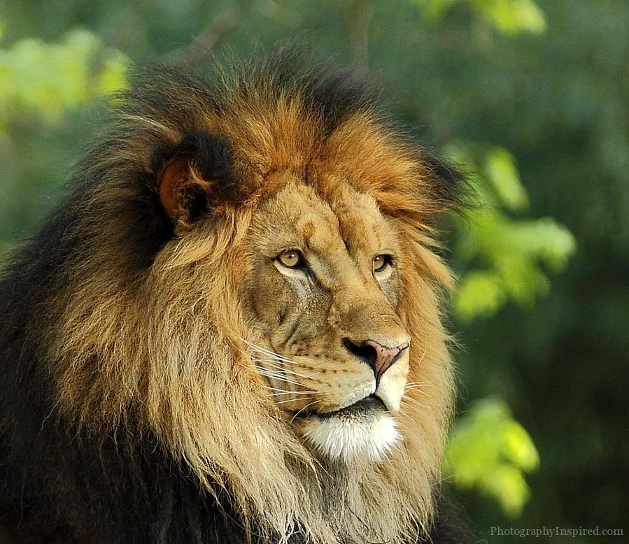 Beautiful Animals around the World