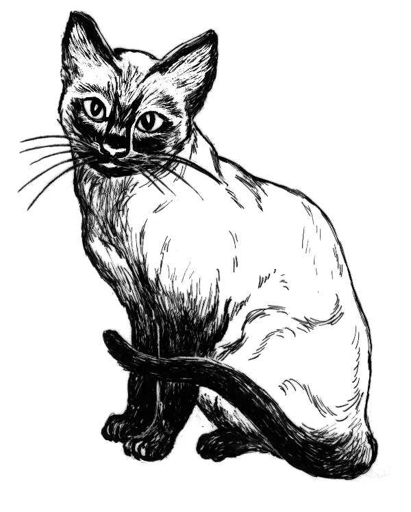 Cat Line Drawing