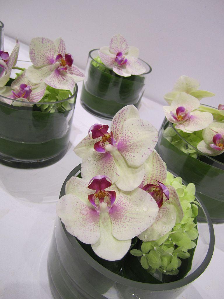 Flower Orchid Floral Arrangements
