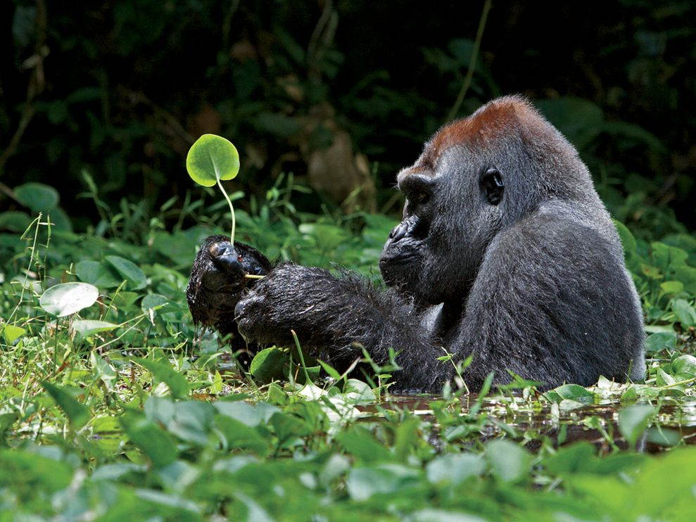 National Geographic Wild Animals