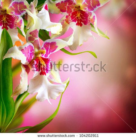 Orchid Flower Design