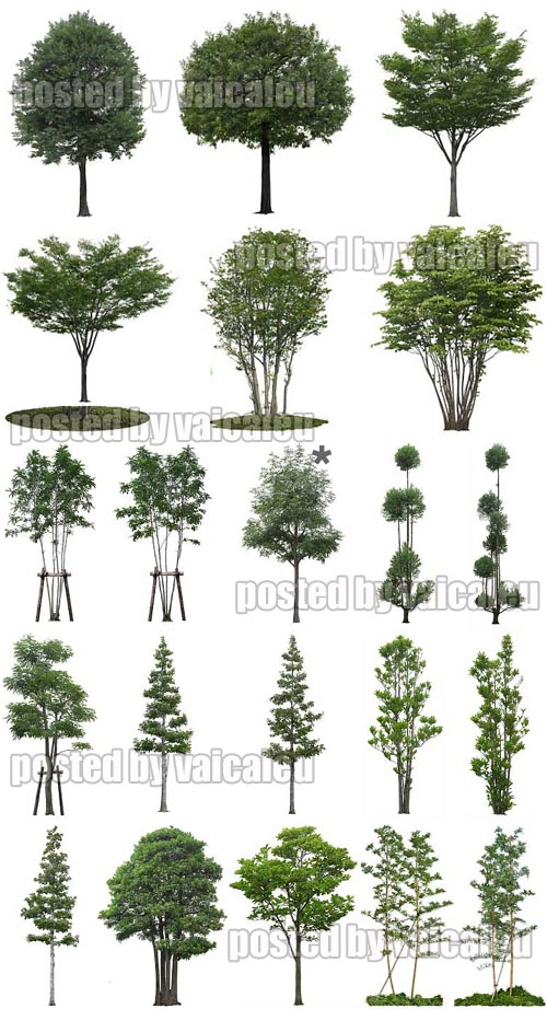 17 Photoshop Tree White Background Images