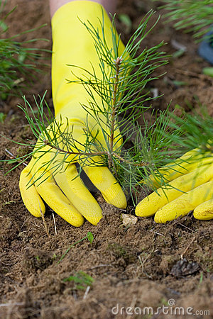 7 Free Stock Photos Tree- Planting Images
