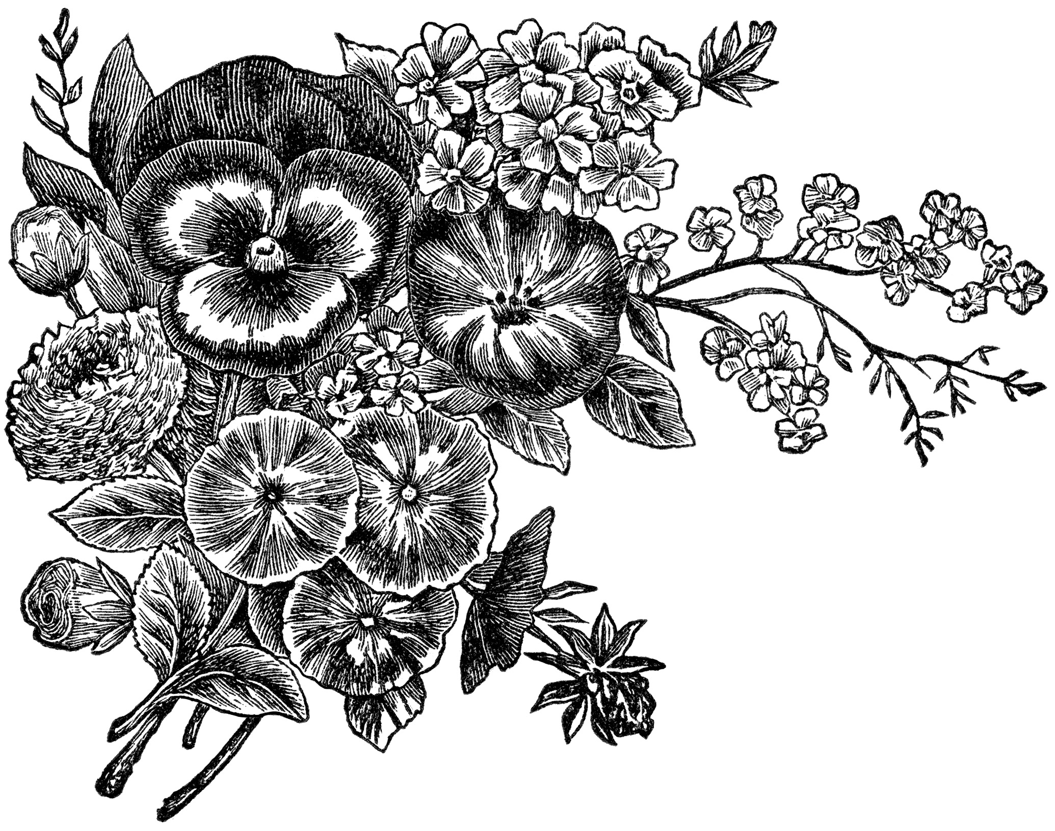 Vintage Black and White Flower Clip Art