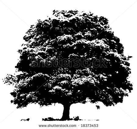 18 Oak Tree Vector Images