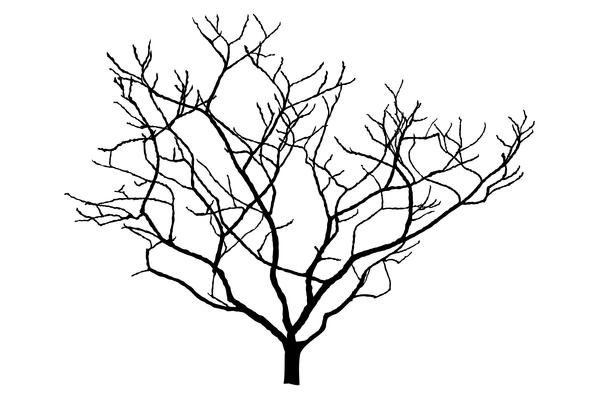 13 Magnolia Silhouette Vector Free Images