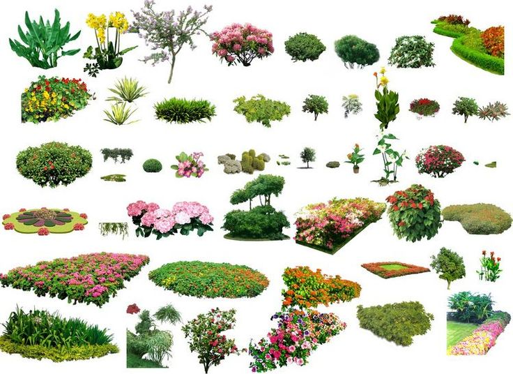 Photoshop Landscape Plants