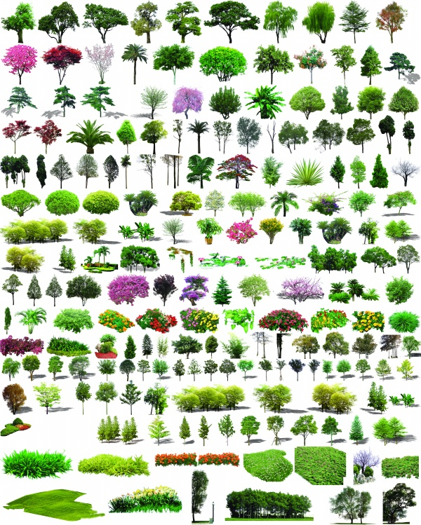 Photoshop Plants and Shrubs