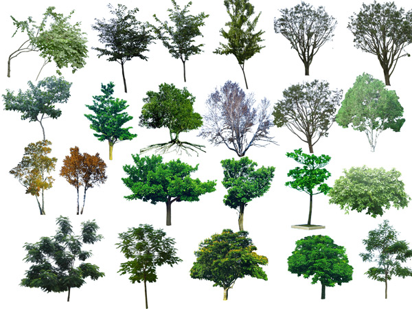 Photoshop Transparent Trees and Shrubs