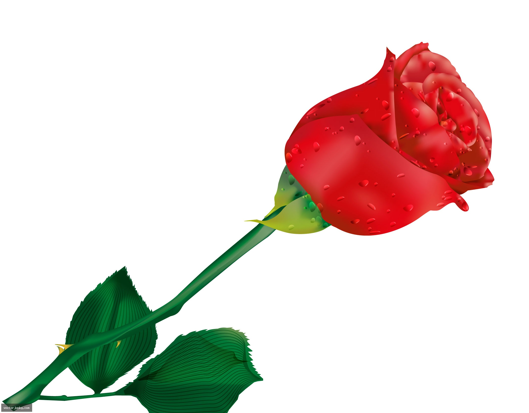 Red Rose Graphics