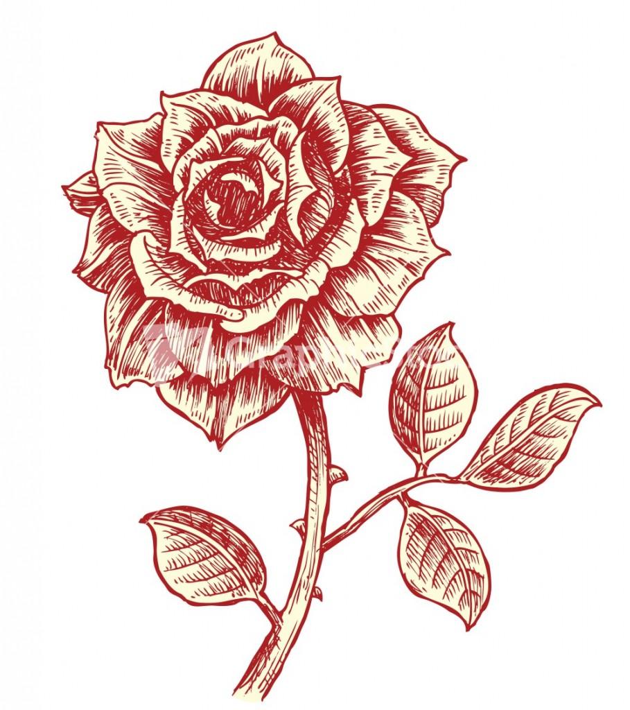 Vector Vintage Roses