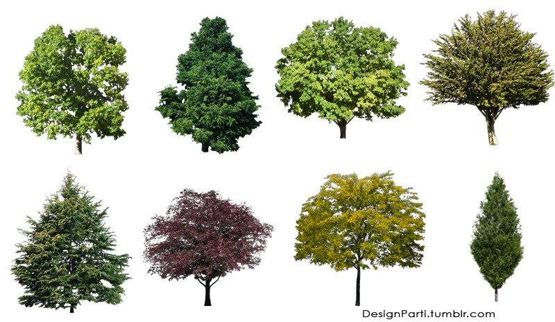 13 Photoshop Free Download Trees Images