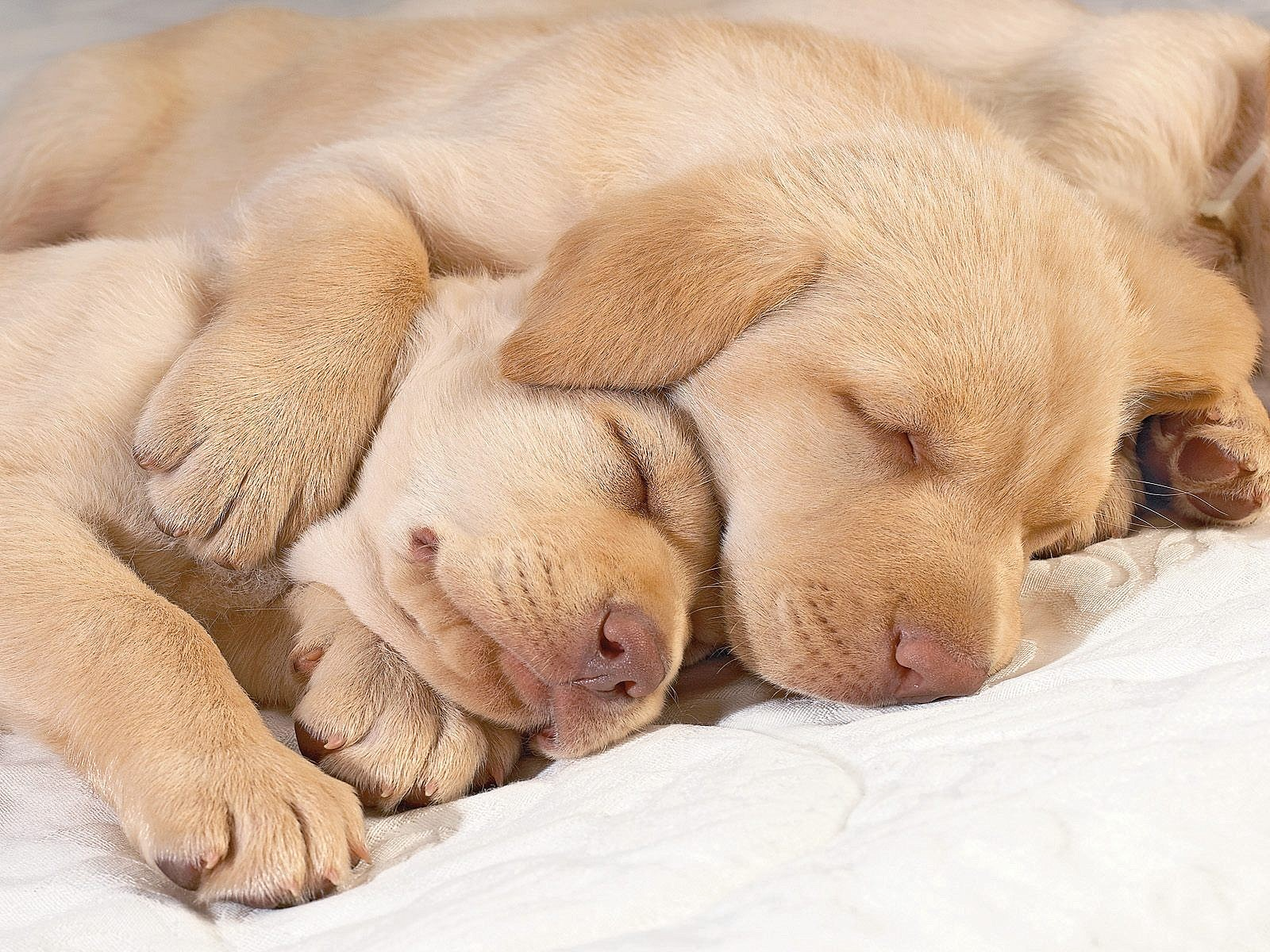 14 Sleeping Pet Photography Images