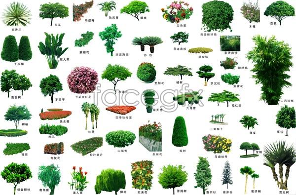 15 Landscape Trees PSDs Images