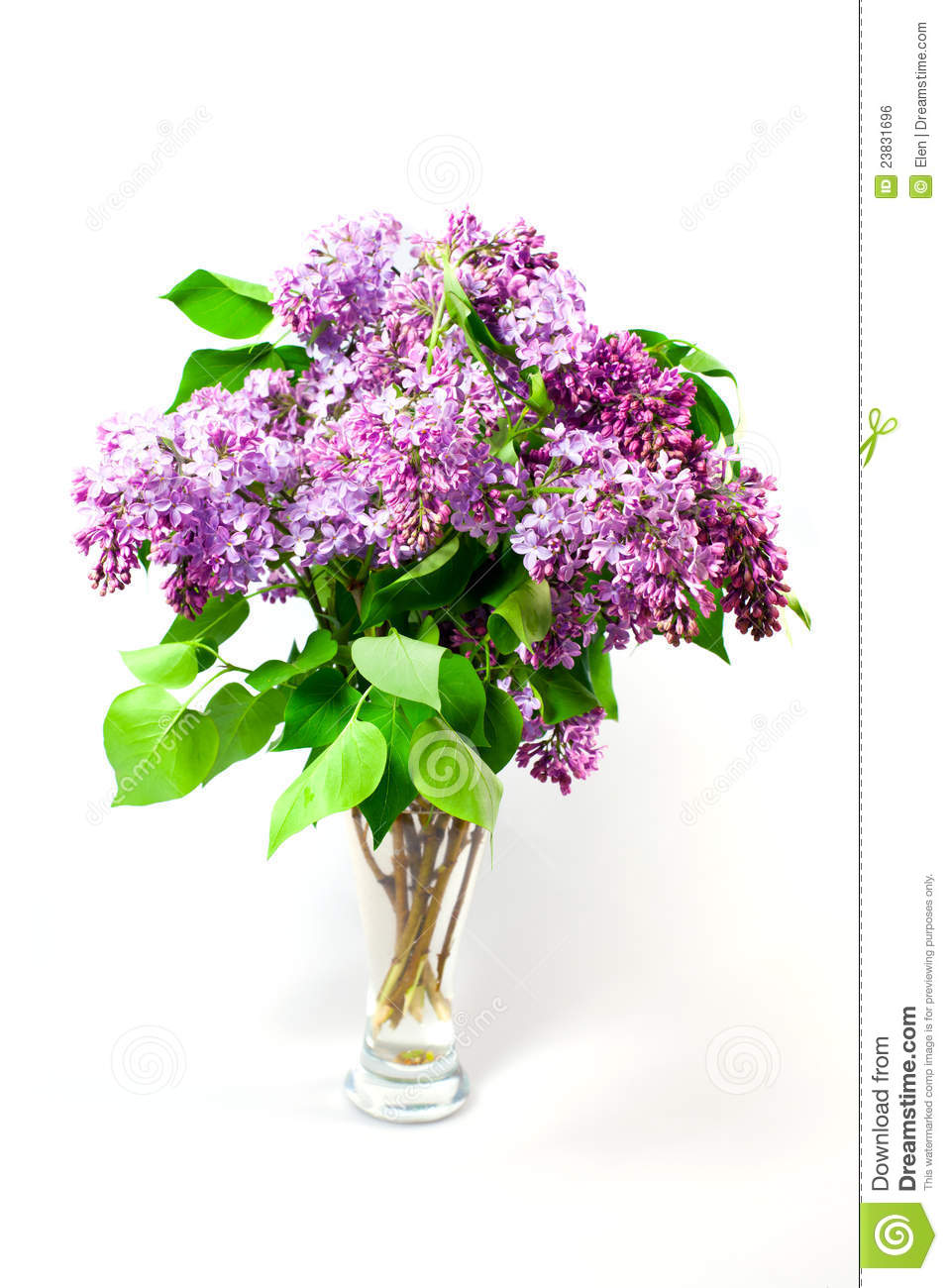 Spring Flowers Lilacs