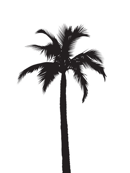 15 Black Palm Tree Vector Images
