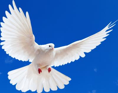 11 Bird Vector PSD Images