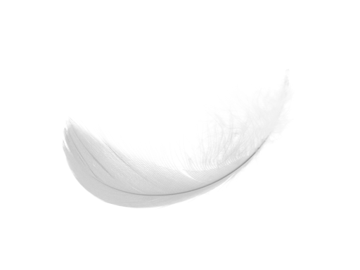 10 Photoshop Frame PNG Guinea Feathers Images