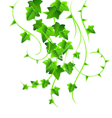 15 Ivy Vector Free Images