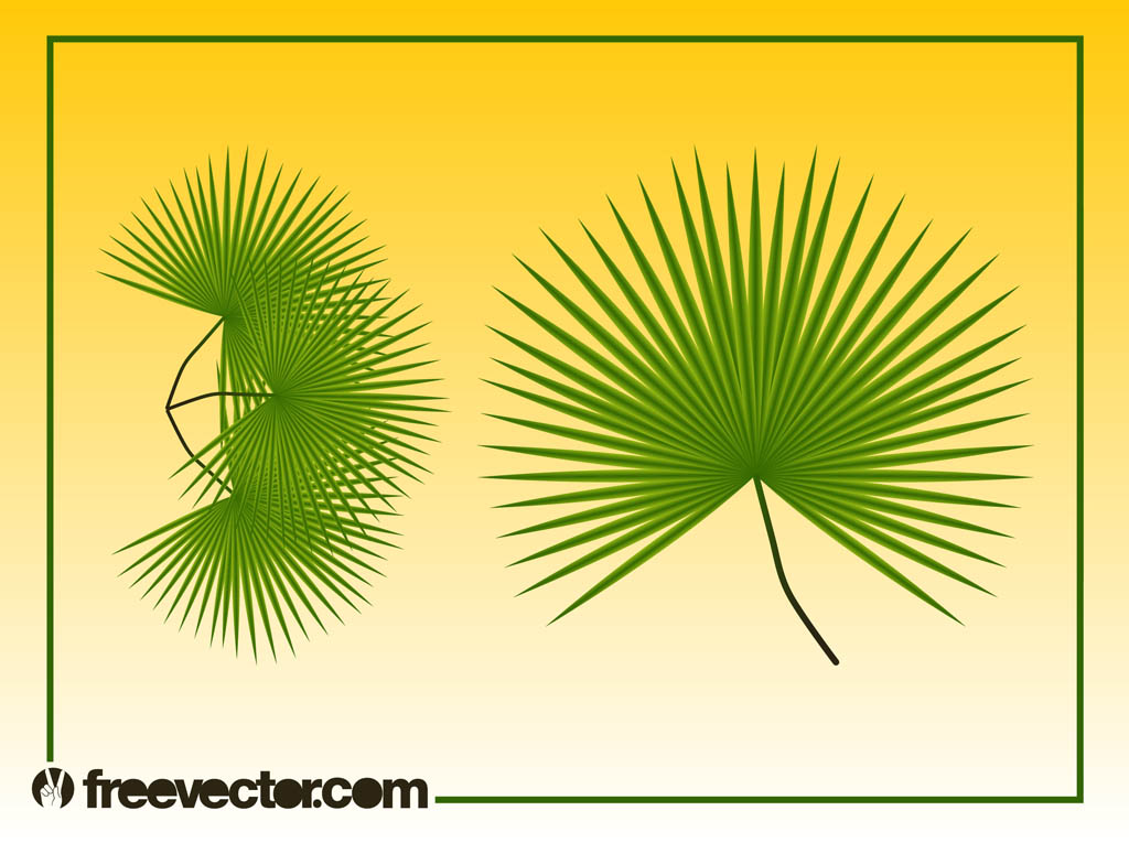 Palm Leaf Vector Free