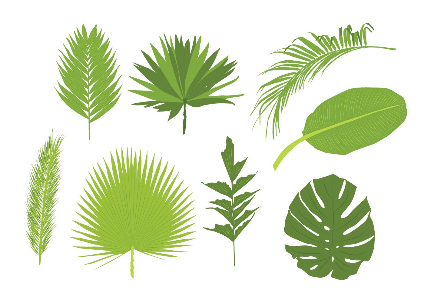 Palm Leaves Free Vector Graphics