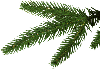 Pine Tree Branches PNG