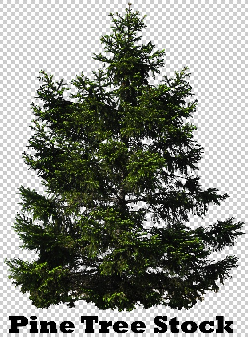 Pine Tree Photoshop