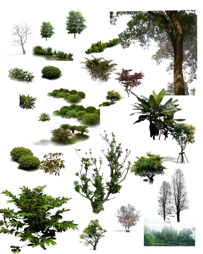 12 Pine Tree PSD Images