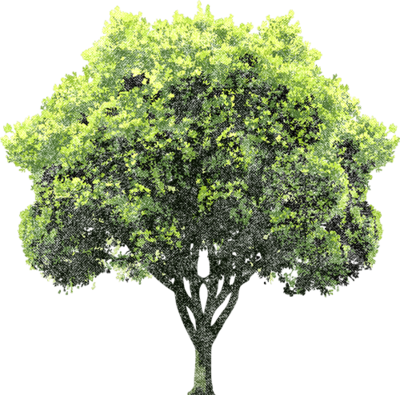 Tree PSD