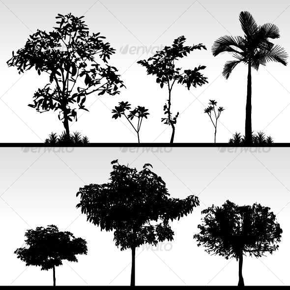 Bush Tree Silhouette