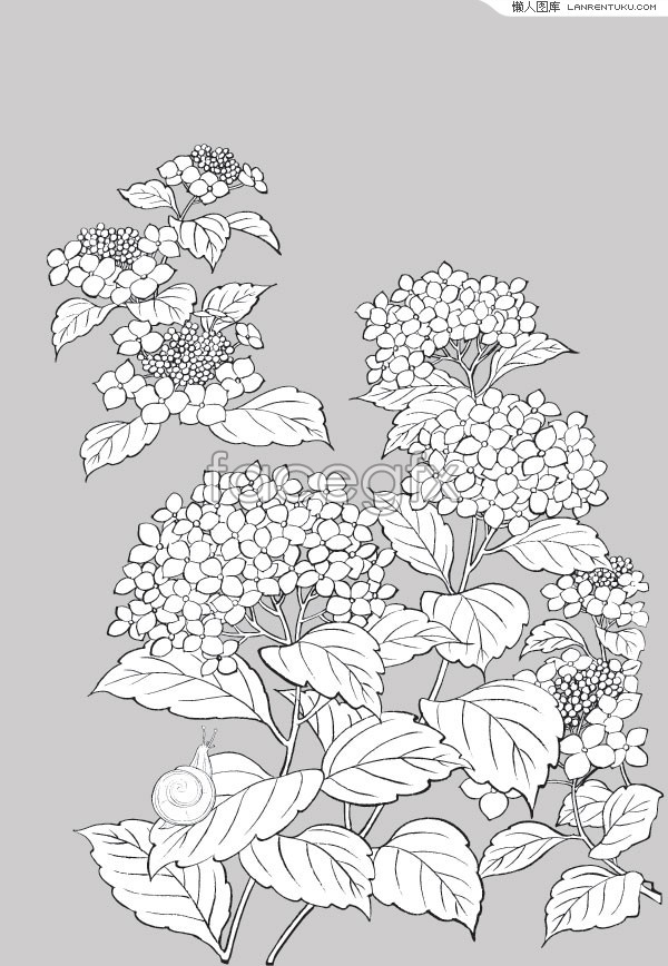 11 Hydrangea Vector Drawing Images