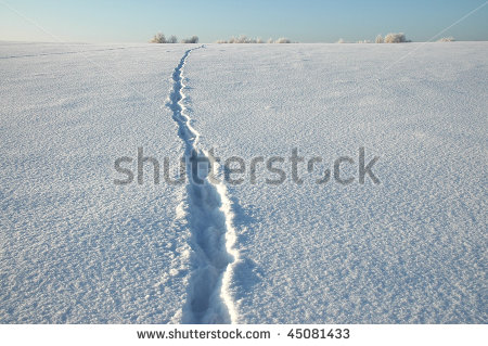 Footsteps Snow Woods