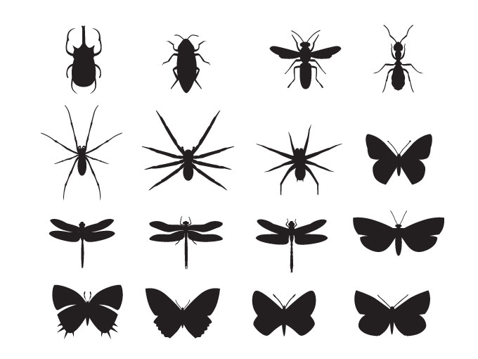 16 Insect Vectors Of Disease Images