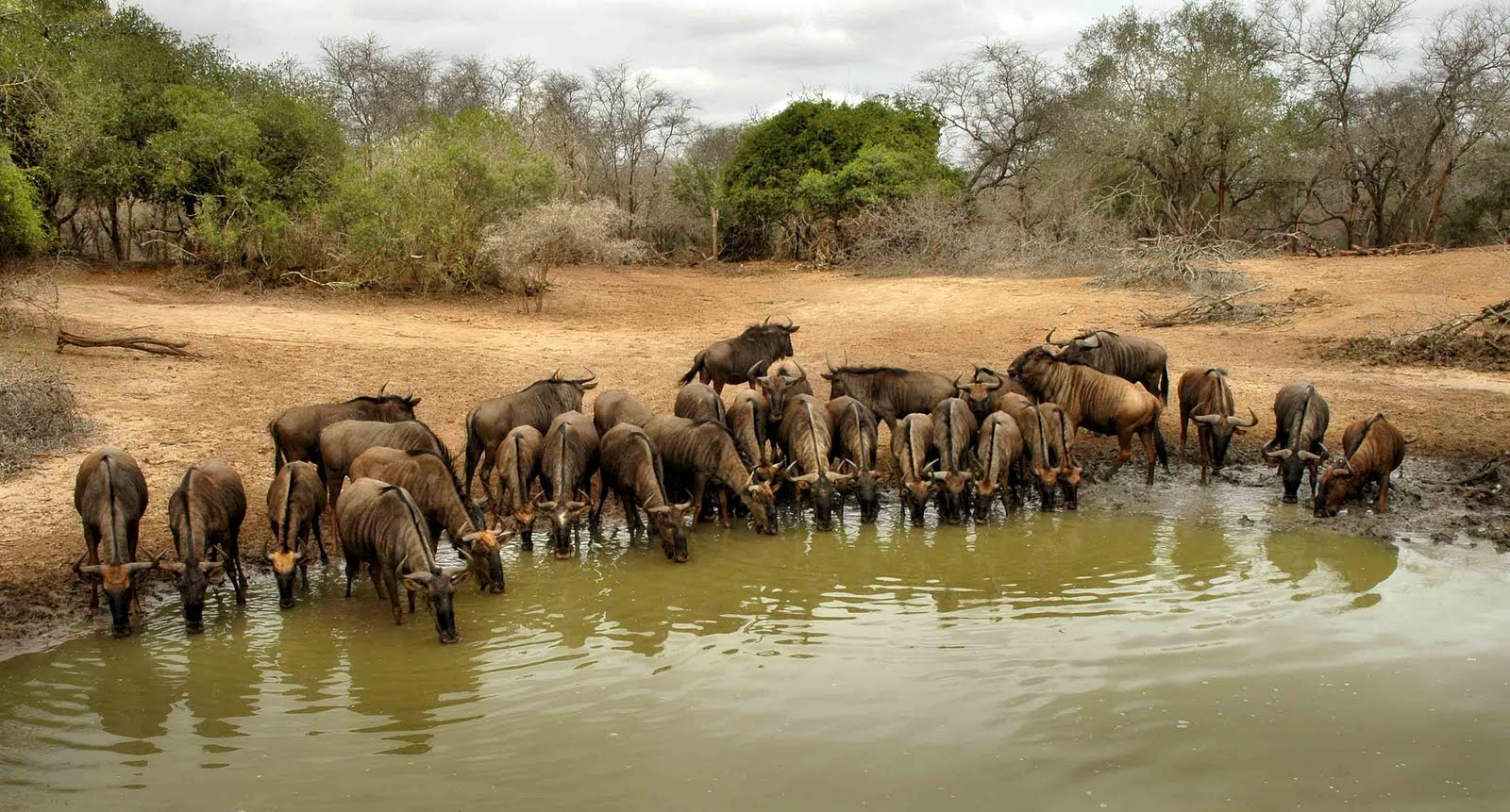 16 Watering Hole Africa Wildlife Photography Images