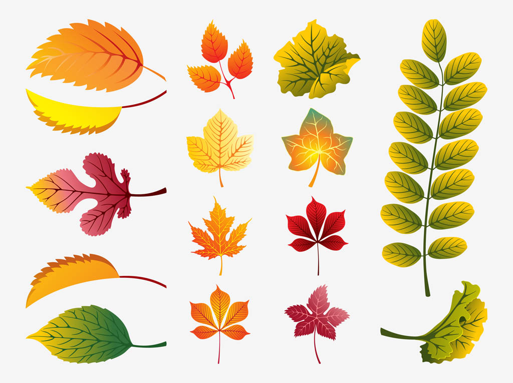 14 Autumn Leaves Vector Images