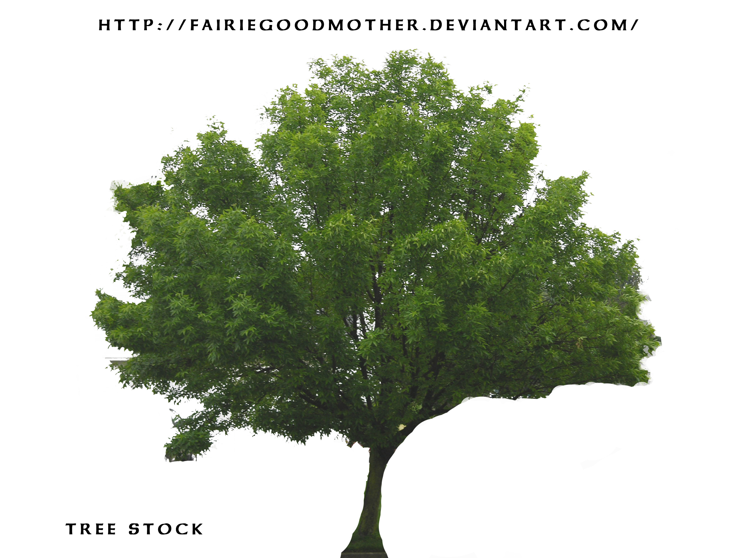 15 Tree Stock Photography Images