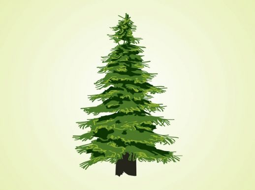 14 Evergreen Tree Graphics Free Images