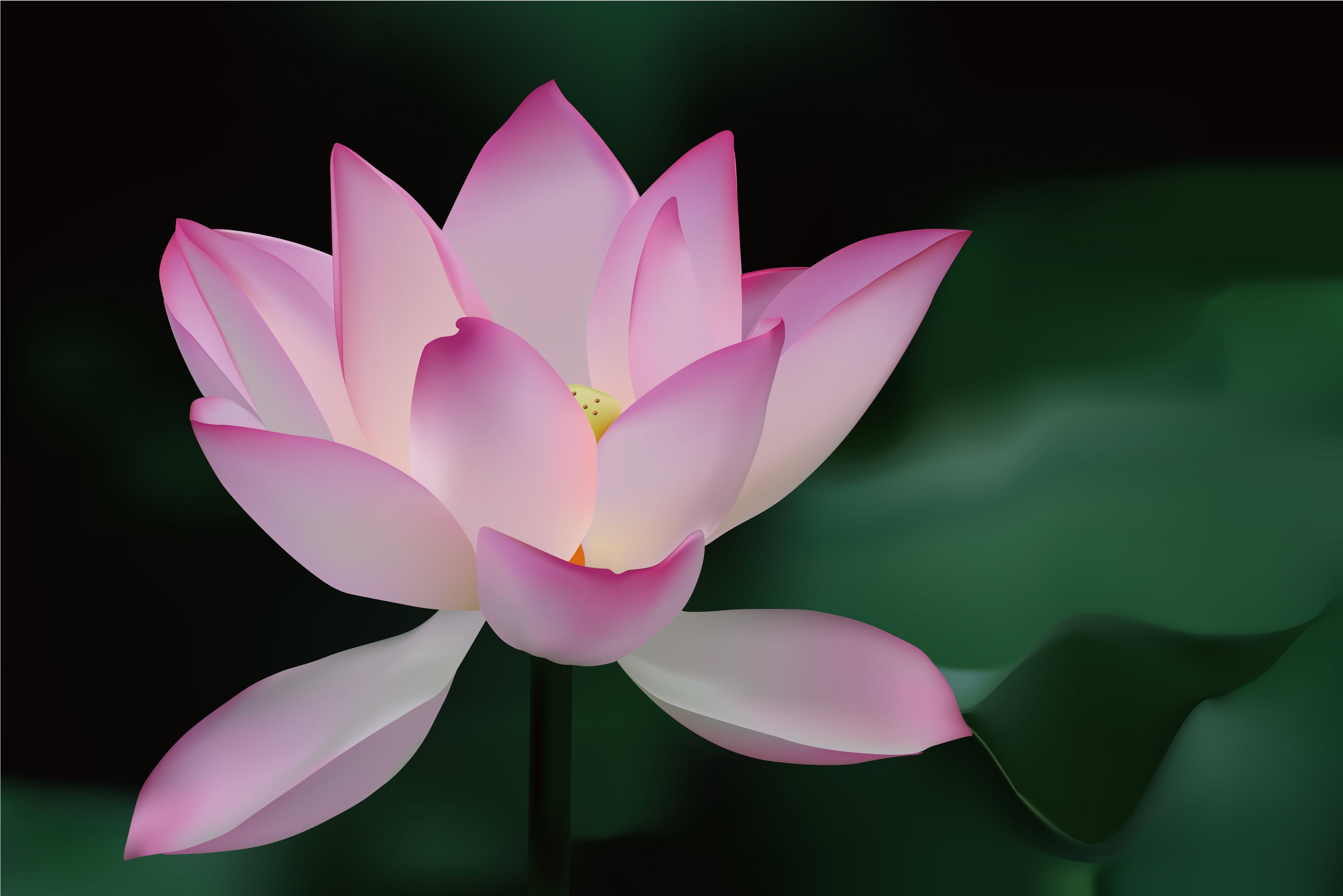 Free Vector Lotus Flower