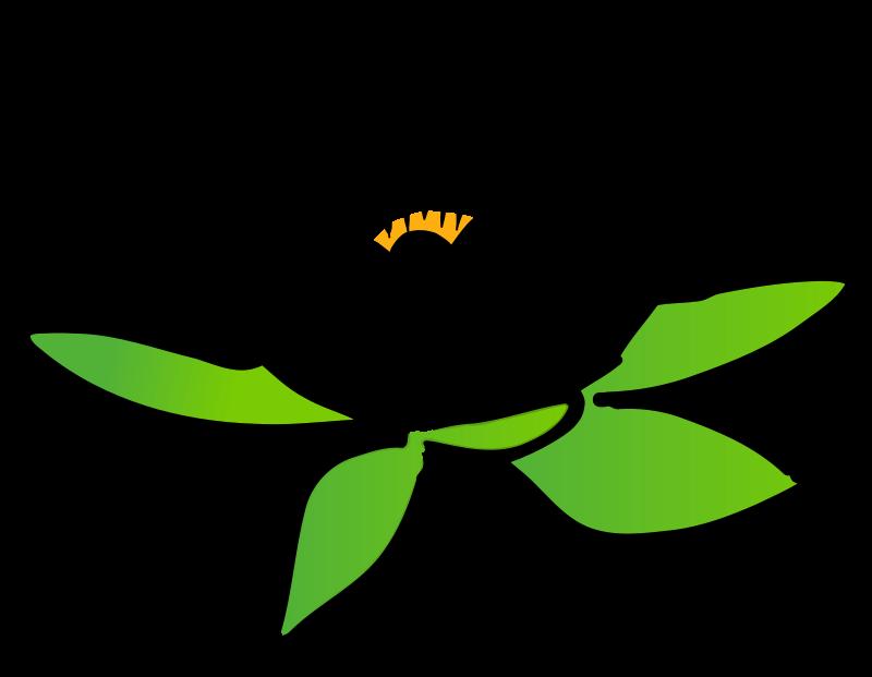 Lotus Flower Clip Art